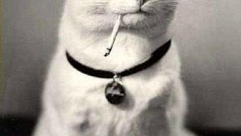 Like a boss – Cat