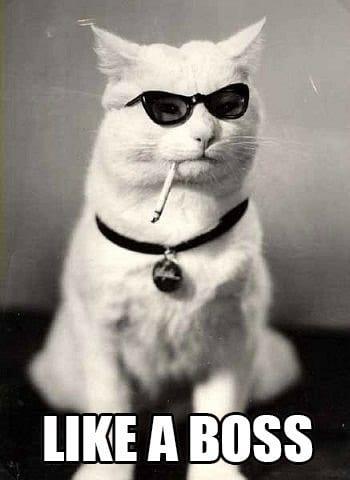 23910019 like a boss cat viral viral videos,Cat Boss Meme