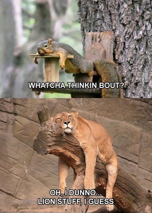 Whatcha thinkin about? – Lion stuff