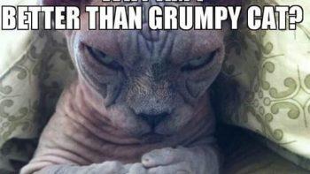 Grumpy Cat Has Feelings