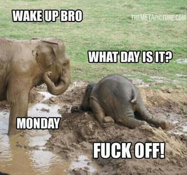 Wake up bro – What day is it? – Monday
