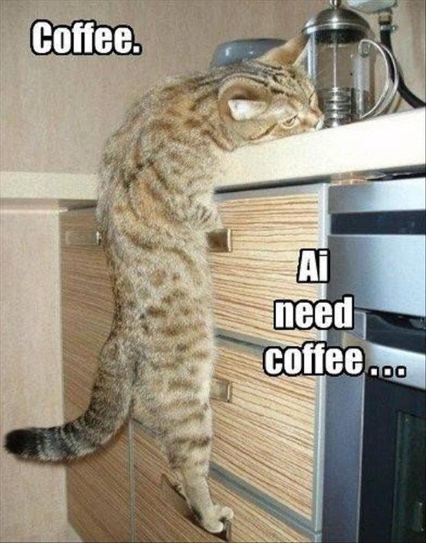 Shoukd Infeed More Wet Food Cat