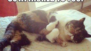 I love you leg – Cat
