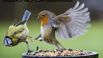 This is Sparta Birds!