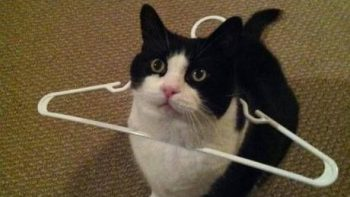 Human I request your assistance – Cat