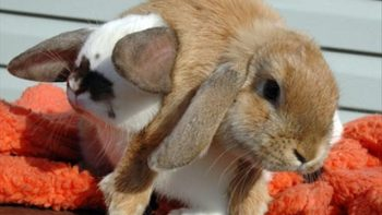 He ain't heavy – He's my brother – Bunny