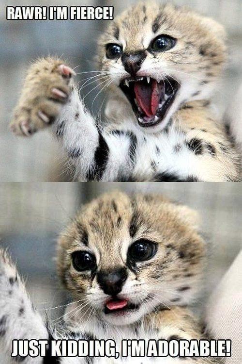 I'm fierce – Just kidding, i'm adorable