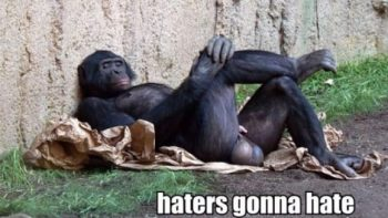 Haters gonna hate – Gorilla