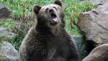 Wel Excuuuuuuse me Bear