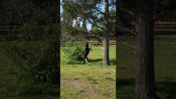 Dogs love their sticks