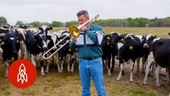 Who Knew Cows LOVE Jazz?