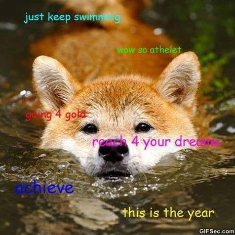 funny-doge