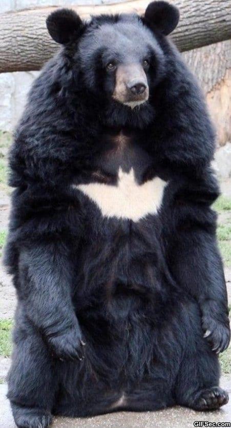 funny-pictures-batman-nanananana