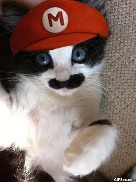 funny-pictures-mario-kitty