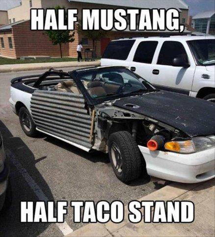 Half mustang