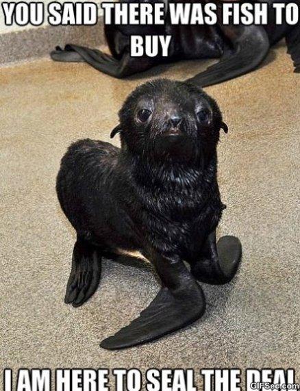 Seal Pun MEME