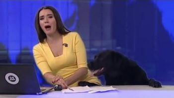 Dog Is Co-Host In Special News Edition