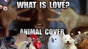 Haddaway – What Is Love (Animal Cover)