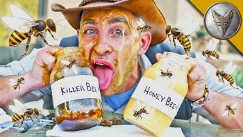 Is Killer Bee Honey Dangerous?!