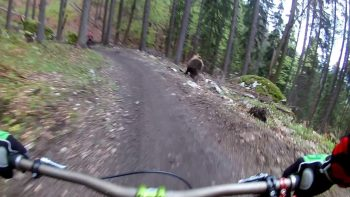 Just A Casual Bike Ride… Whoa, Is That A Bear Coming At Us?!