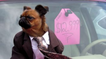 This Is The Best Car Dealer Commercial Ever (Because Of The Dog)