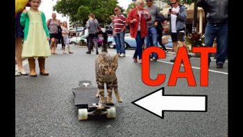 Boomer The Skating Cat