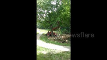 Man On Tractor VS Tree