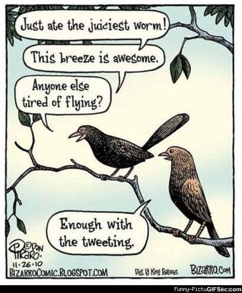 Twitter – The bird version