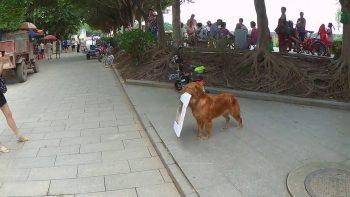 Dog Advertising A Burger Bar In China