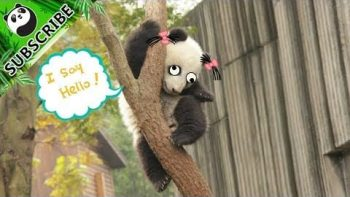 How Are Pandas Still Not Extinct?