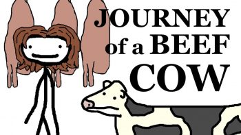 The Journey Of A Beef Cow