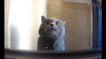 The Vlogging Cat