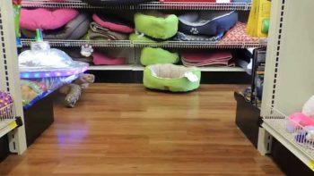 UFO Strikes Pet Supermarket