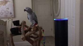 Pets And An Amazon Echo Aren't The Best Combination