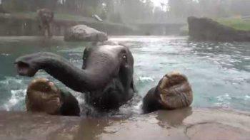 The Apple Addicted Elephant