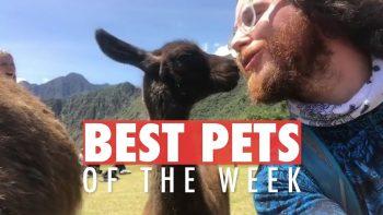 Best Pets of The Week