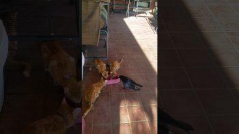 Cats Adopt A Crow