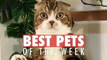 The Best Pets Of The Week