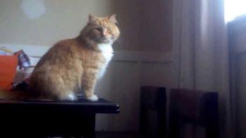 Skimbles, The Epic Cat Fail