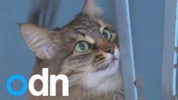Stray Cat Saves Baby's Life