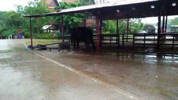 Baby Elephant Loves The Rain