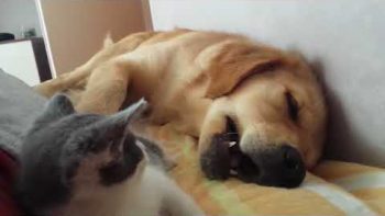 Kitten Plays, Dog Sleeps: A Lovestory