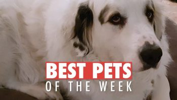 The Goodest Pets Of The Week