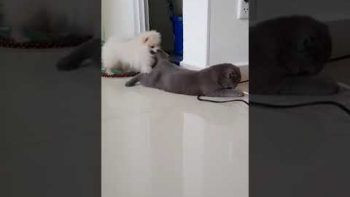 Cat Sublets Out Its Tail To Dogs
