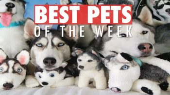 Best Pets Of The Week