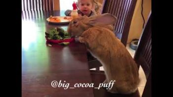 Little Girl And Giant Bunny Share A Meal