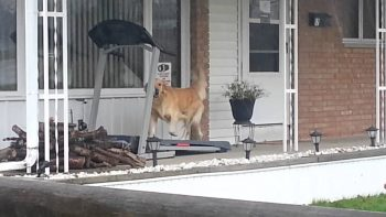 When It's Pouring But You Need Your Walk